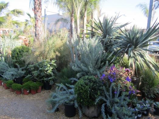 Grubb Plants