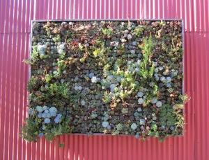 Vertical Garden on Metal Wall