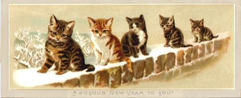 Kittens on Snowy Wall
