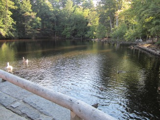 Mill Pond 02